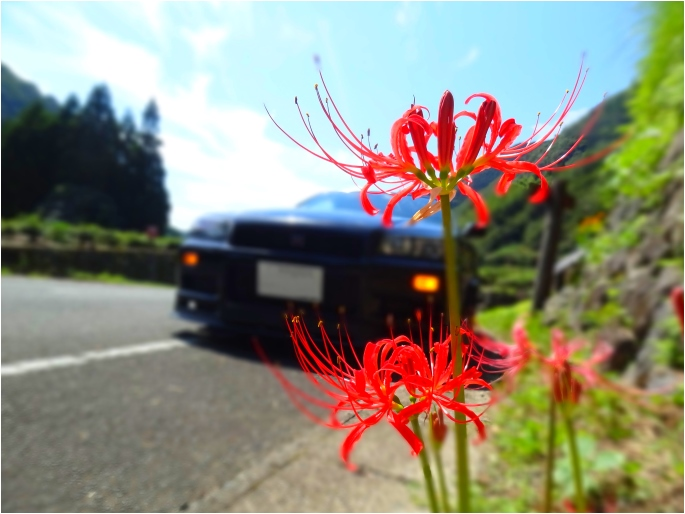 GT-R'14_lycoris radiata.jpg