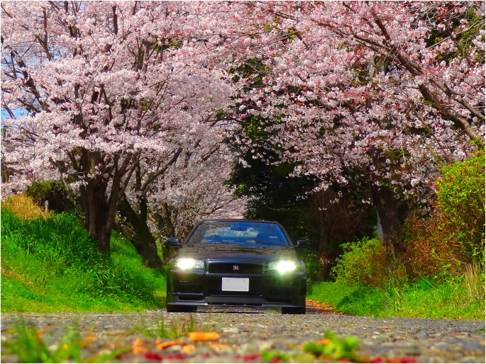 GT-R'15_cherry blossoms (1).jpg